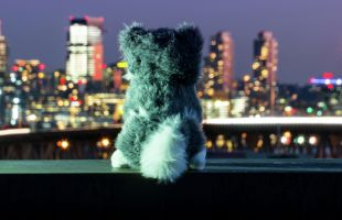 Dash doll looking at Seattle skyline at night