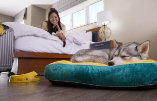 Women on guestroom bed looking ad dog sleeping on dog bed