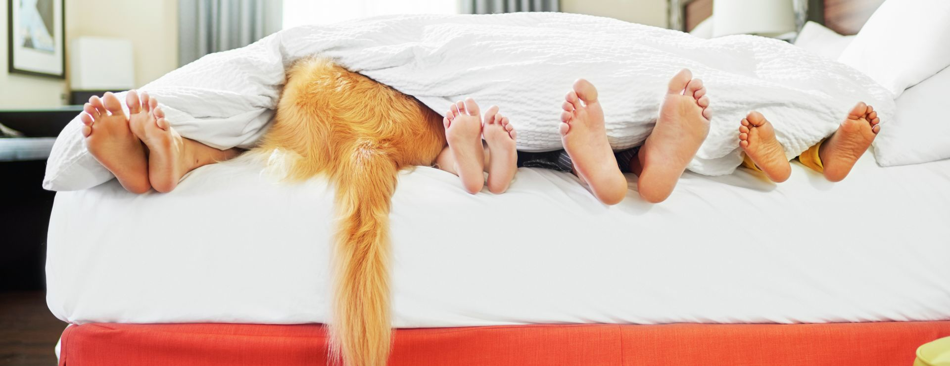 Family with feet hanging out of bed with dog