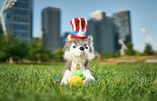 Dash sitting in grass with patriotic hat