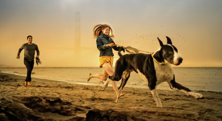 A man and women running with a dog on the beach